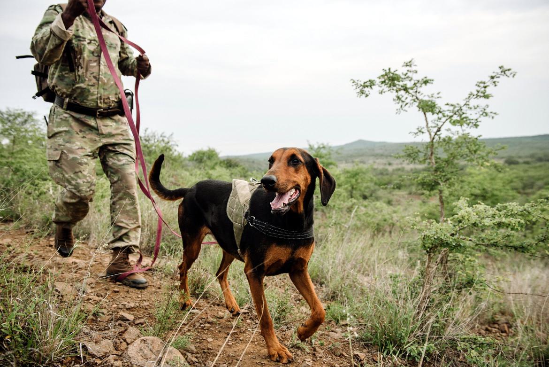 HiP K9 Unit Established to Combat Rhino Poaching