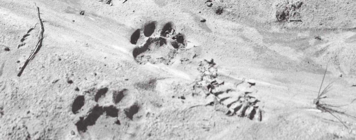 Wildlife-Tracks-and-Signs
